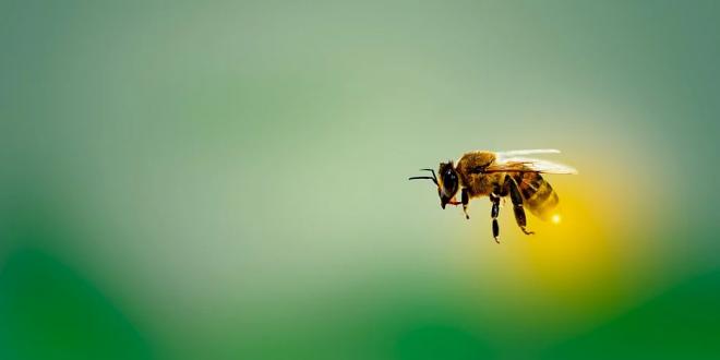 méh kezelés pikkelysömörhöz